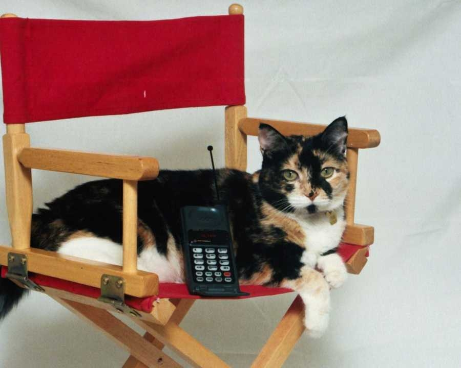 Cat and phone