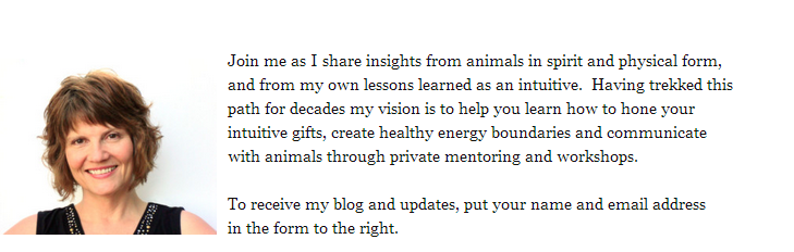 Join me as I share insights from animals in spirit and physical form, and from my own lessons learned as an intuitive.  Having trekked this path for decades my vision is to help you learn how to hone your intuitive gifts, create healthy energy boundaries and communicate with animals through private mentoring and workshops.