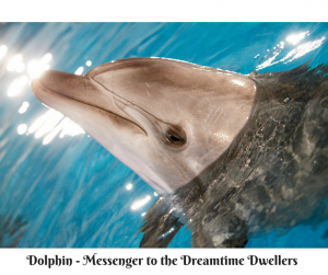 Dolphin - Messenger to the Dreamtime (1)