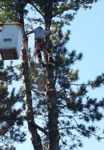 tree guy sm
